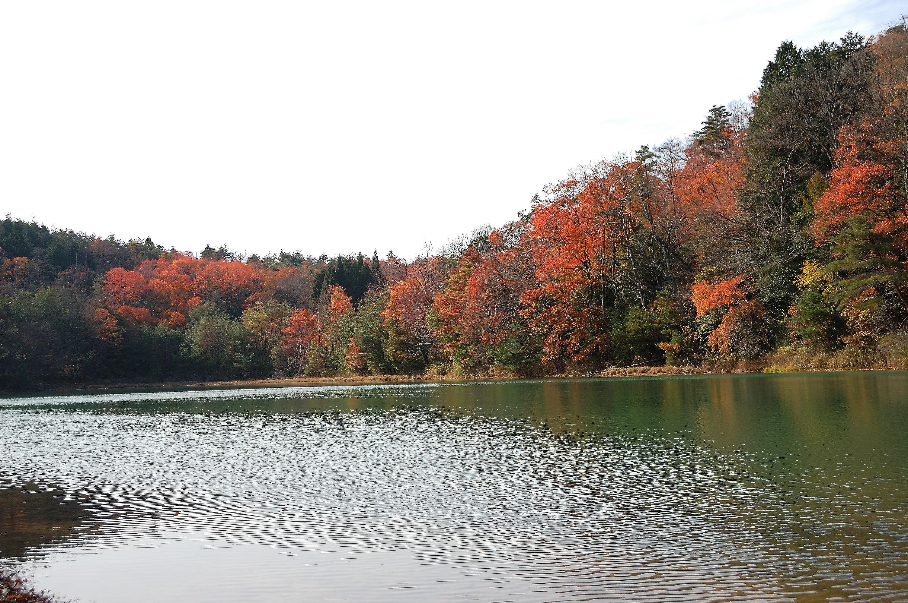 エメラルドグリーンに輝く京都・沢の池 | wakasa15thfd