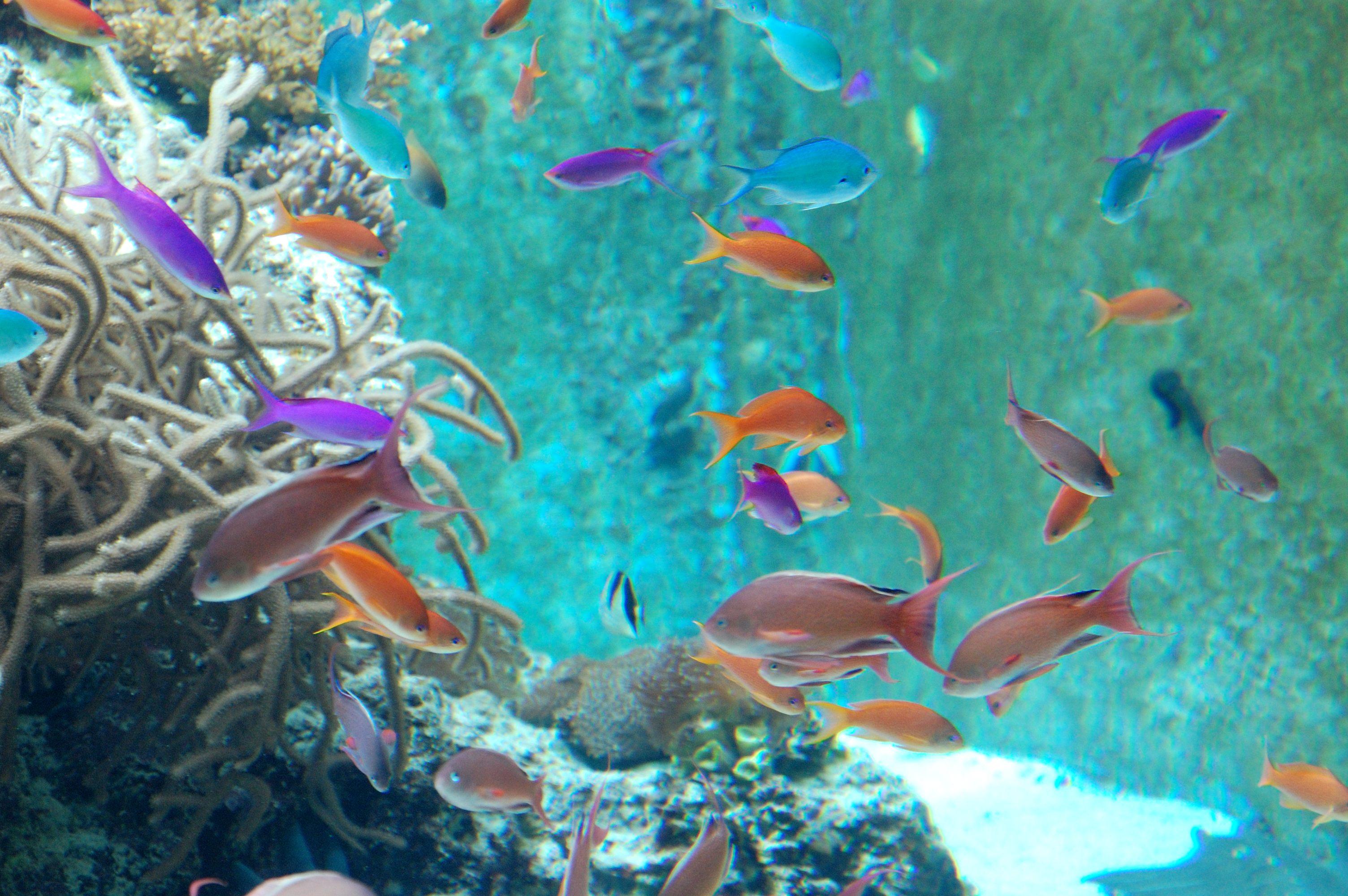 水族館の鮮やかな熱帯魚