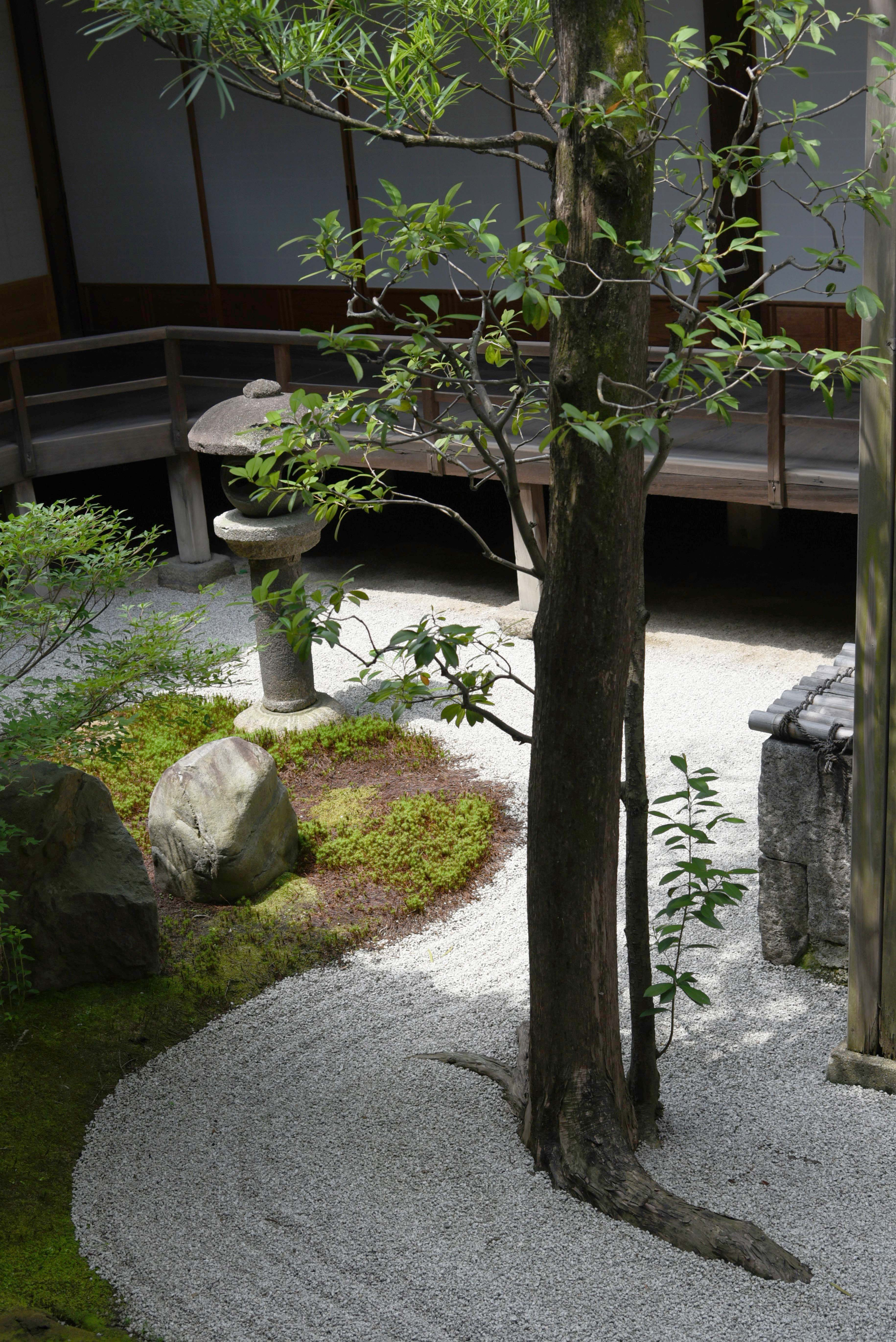京都 両足院 半夏生の庭 2019 Wakasa15thfd